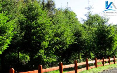 Beneficios de vivir en un entorno natural